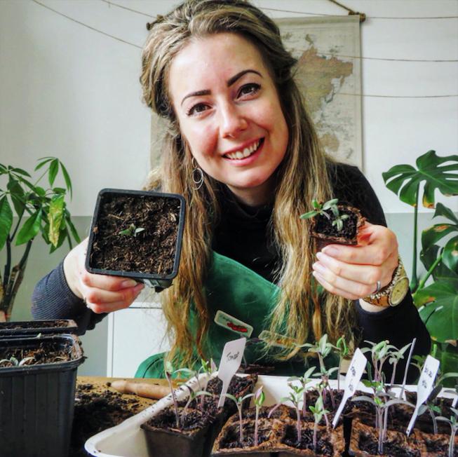 Tomatenplanten verspenen