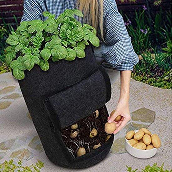 Aardappelen kweken